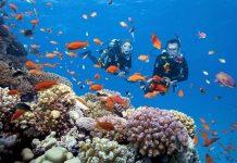 lặn biển Nha Trang 3